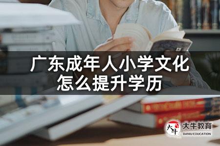 广东成年人小学文化怎么提升学历
